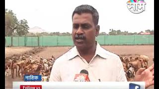 Goat farming is seen as side business in Nashik