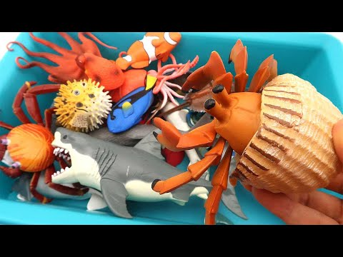 Sea Animals In The Deep Sea! Learn Sea Marine Water Animal Names - Shark, Nemo, Dori, Stringray