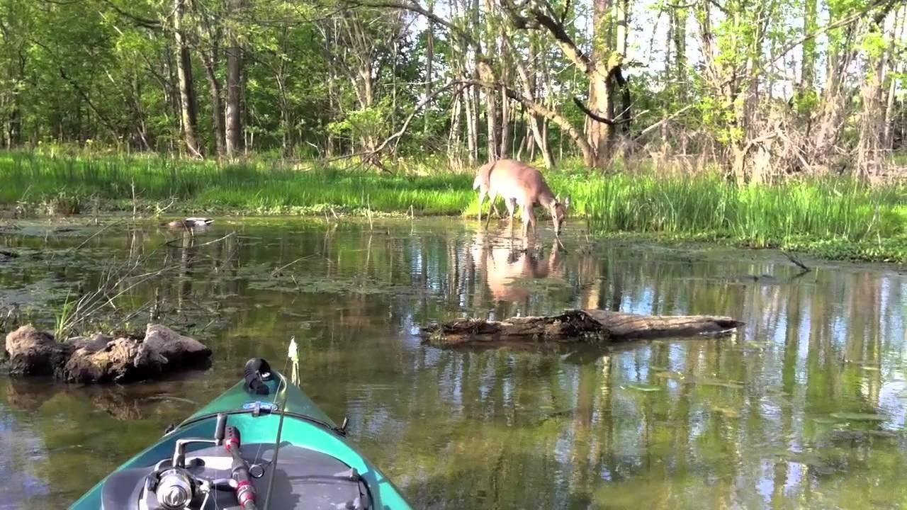 Deer shelby lake kayak fishing youtube for Fishing license ky