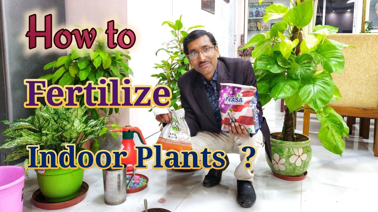How To Fertilize Your Indoor Plants