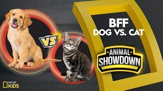 Dog vs. Cat: Battle for the BFF | Animal Showdown