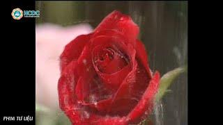 Những bông hoa trước bão