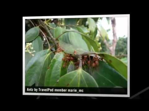 """""""The Tea Gardens"""" Marie_mc's photos around Sylhet, Bangladesh (images of bangladesh tea garden)"""