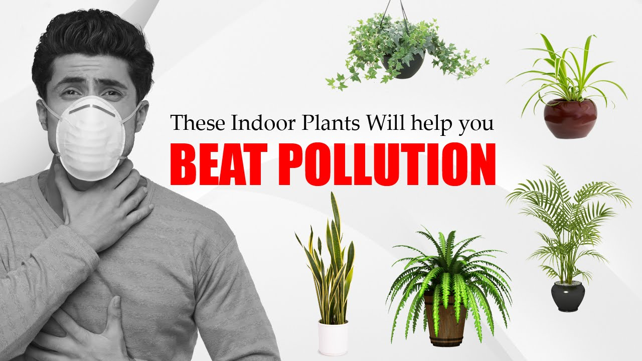 वायु प्रदुषण Air Pollution Causes Amp Control At Home