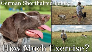 German Shorthaired Pointer  How Much Exercise Does a GSP Really Need?