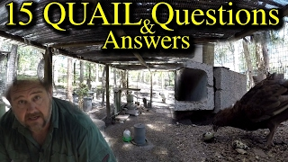 15 Quail Questions Answered