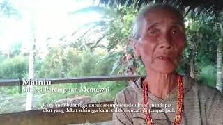 Dampak Kerusakan Hutan Bagi Sikerei Mentawai