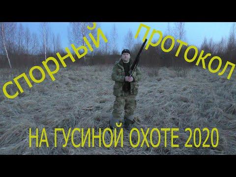 СПОРНЫЙ ПРОТОКОЛ на весенней охоте на гуся 2020.