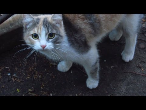 New cute cat meows on the street and asks for food