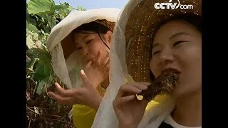 The sweetness of nature| CCTV English