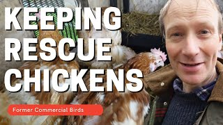 Keeping Rescue Chickens on our smallholding. (What are they really like?)