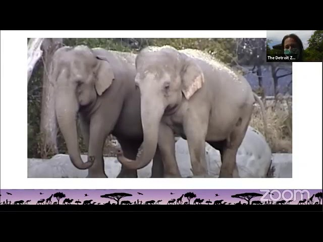 Detroit Zoo | Educational Lesson: Wanda and Winky