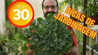 Veja 30 Truques e Dicas de Jardinagem