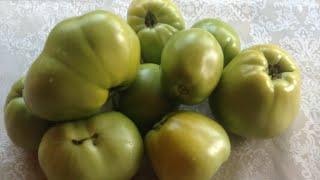 Как ускорить созревание и спасти урожай помидор от фитофторы