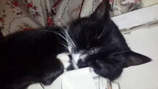 Кот спит на батарее