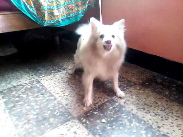 dog barking angry video, dog barking angry clip