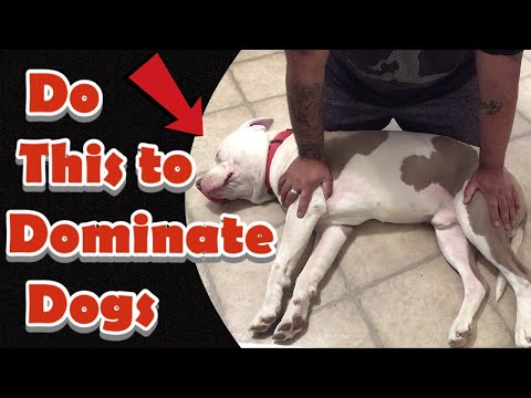 How To Pin Down A Dog / Side Submitting Dominate Dogs! Become Alpha And Calm Down A Dog In Minutes!