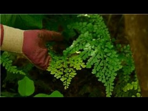 Gardening Tips & Plant Care : How to Design & Plant a Fern Garden