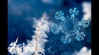Снежинки - зимние цветы! - Детские песни и клипы - Snowflake / Best Children Songs