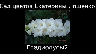 видео Белые цветы для сада: сорта деревьев и цветков с белыми цветами