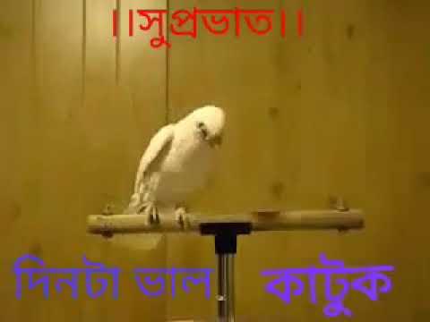 Jai Radhe Radhe Govinda Govinda Bolo Re