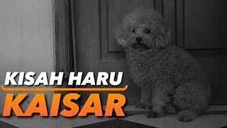 KISAH HARU SEEKOR ANJING BERNAMA KAISAR | THE GOLDEN FAMILY