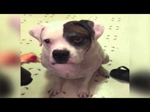 Adorable Dog Can't Stop Slobberring