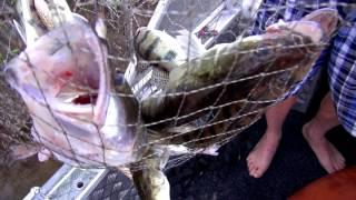 Рыбалка в Астрахани. Уехали на остров вдвоем. Последняя рыбалка. Съемки на GoPro