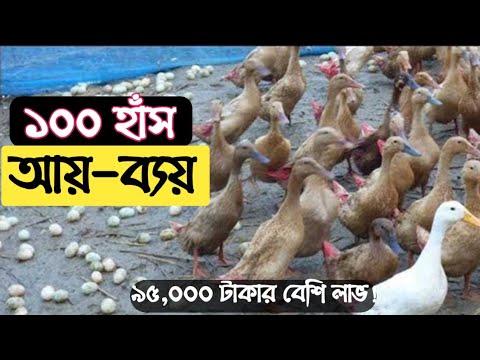 Download ১০০ হাঁস পালনে কত টাকা আয় হতে পারে?100 duck Palon || IDEABD