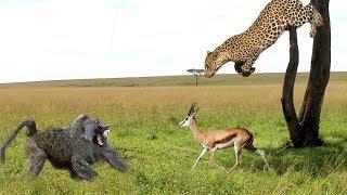 леопард атака животные на дереве - дикая жизнь, слон, крокодил, тигр, Лев, змея