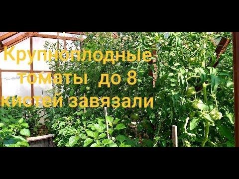Обзор огорода 10 июня в жару и засуху.Помидоры, перец, баклажаны  - радуют