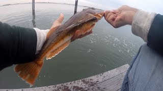 Calm Backwater Fly - FISHING AFTER FISHING - Striped Bass & Sea Robin