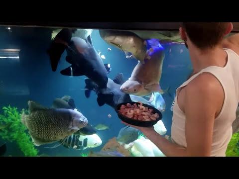 OHIO FISH RESCUE Feeding time 4400gallons