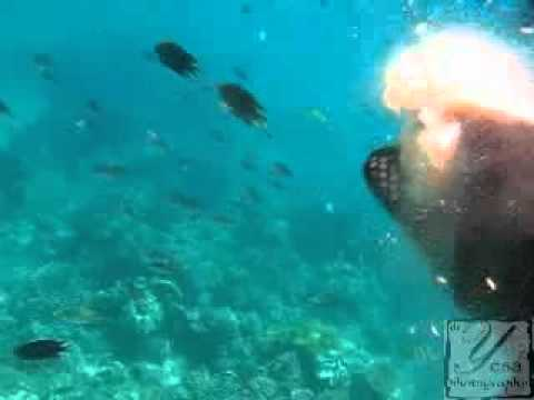 Hidden Underwater Paradise @Tolitoli Sulteng Indonesia