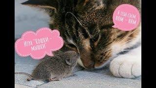 Настольная игра Кошки - Мышки.cheese hunt. Сырная охота Обзор, распаковка игры Кошки мышки