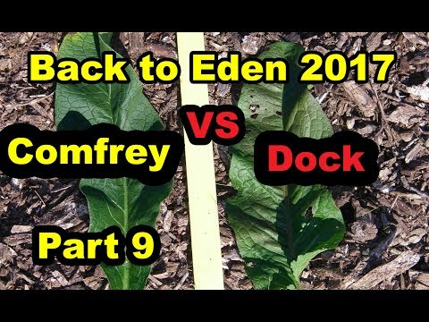 Comfrey VS Dock. Back to Eden Gardening Method with Wood Chips for No till Organic begin 101.  Pt 9