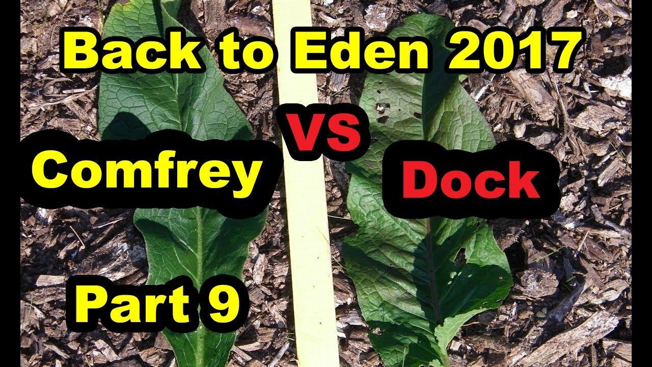 Comfrey Vs Dock Back To Eden Gardening Method With Wood Chips For No Till Organic Begin 101 Pt