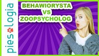 Czym zajmuje się treser psów, zoopsycholog i behawiorysta?