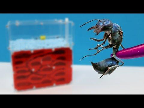 Neue Ameisen Farm Aus Russland Für Die Ameisen Königin - Maladez TM