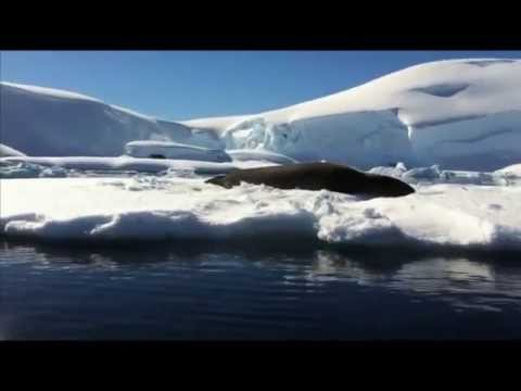 Travel to Antarctica ¦ Antarctic Tourism ¦ Antarctica Cruise