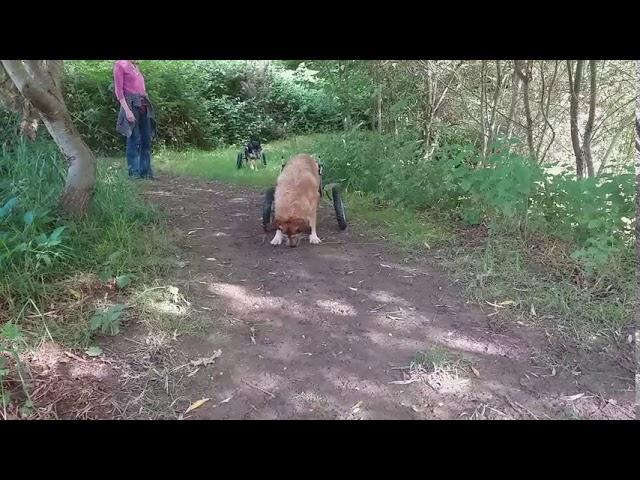 Nikitas Vergnügen beim Spaziergang
