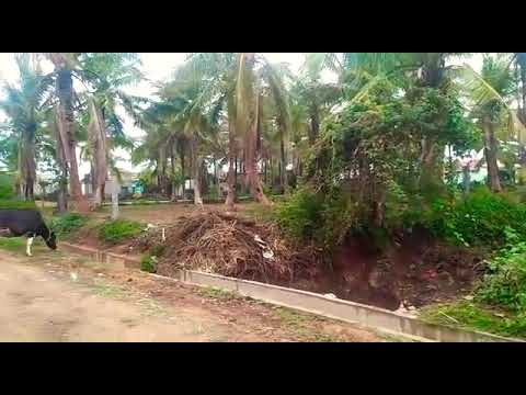 1 1/2 acre read sail one mango tree 26 lakh per acre for more information  and details call me