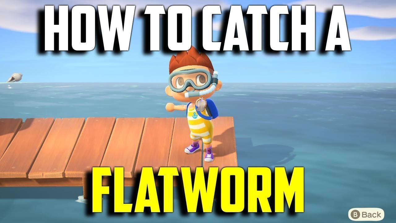 How To Catch A Flatworm Flatworm Animal Crossing New Horizons Flatworm Acnh Catch An Flatworm Youtube