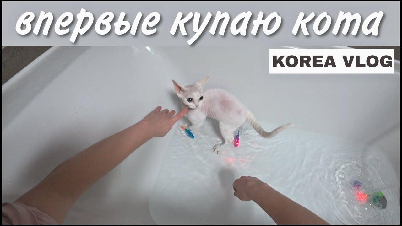 Купаю своих животных :) KOREA VLOG