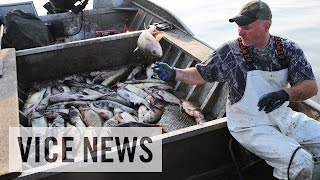 The Worst Fish in America: Asian Carpocalypse