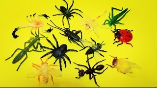 learn about insects bugs spiders for kids children toddlers fun educational learning video