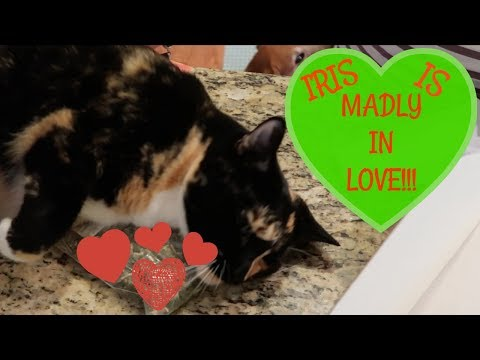 IRIS IS MADLY IN LOVE WITH ?????