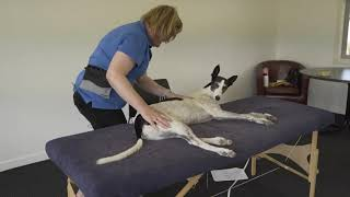 Greyhound  Bloopers