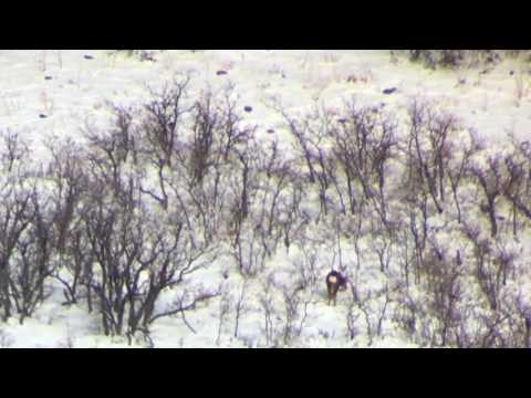 Wasatch Front Extended Archery 2016