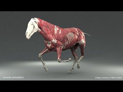 Weta Digital Horse FEM Simulation